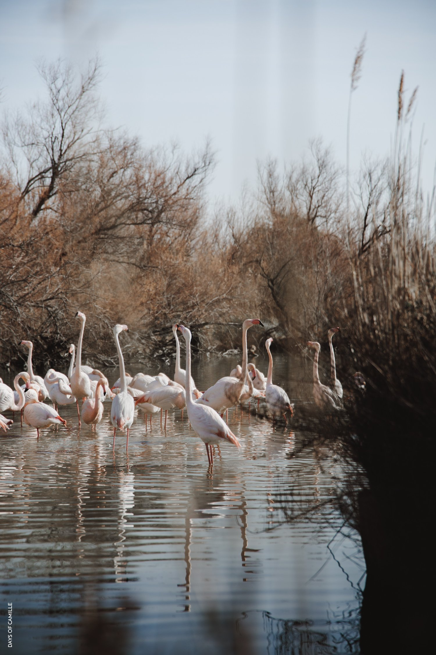daysofcamille-parc-ornithologique-camargue-pontdegau04