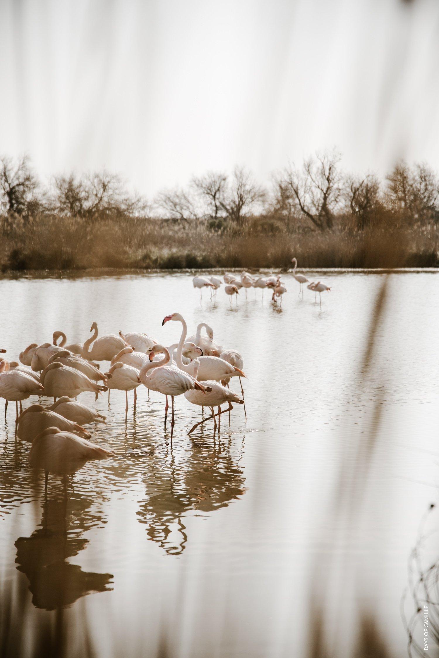 daysofcamille-parc-ornithologique-camargue-pontdegau22