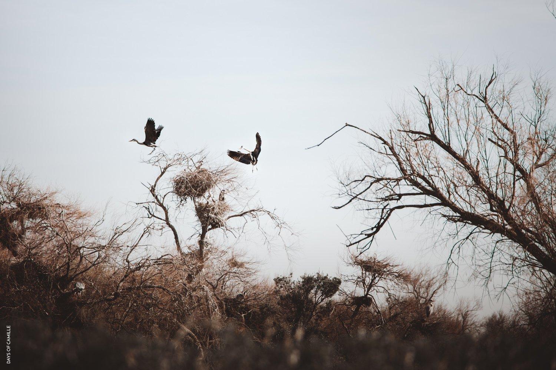 daysofcamille-parc-ornithologique-camargue-pontdegau38