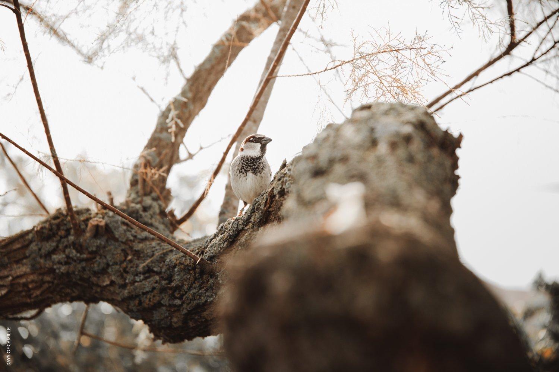 daysofcamille-parc-ornithologique-camargue-pontdegau39