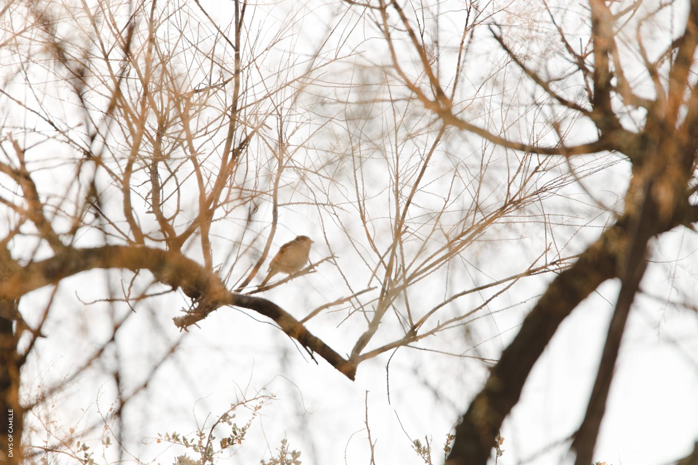 daysofcamille-parc-ornithologique-camargue-pontdegau43