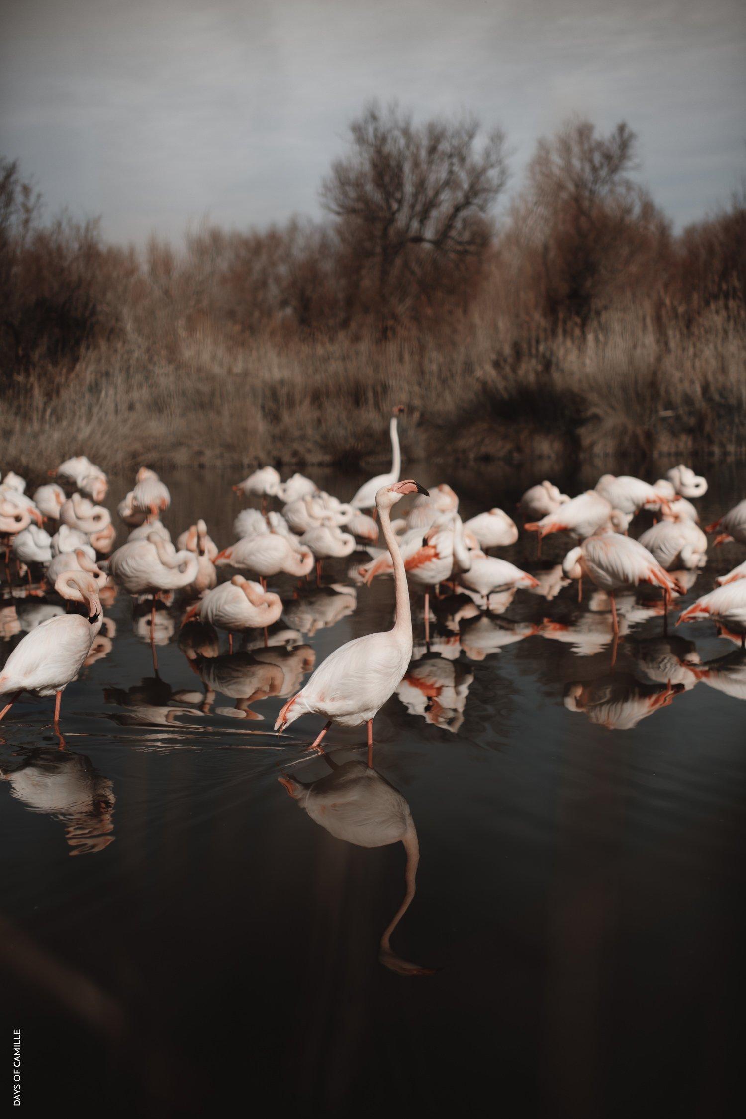 daysofcamille-parc-ornithologique-camargue-pontdegau46