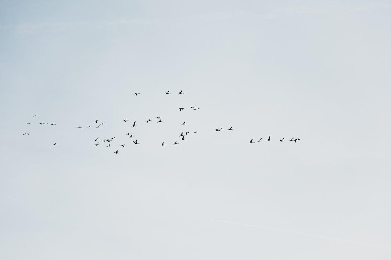 daysofcamille-parc-ornithologique-camargue-pontdegau60